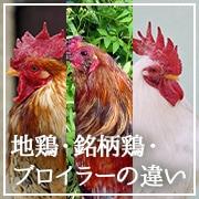 地鶏・銘柄鶏・ブロイラーの違いを分かりやすく解説!ページへのリンク