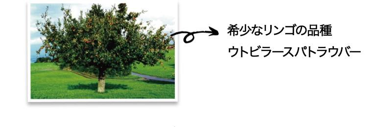 希少なリンゴの品種ウトビラースパトラウバー
