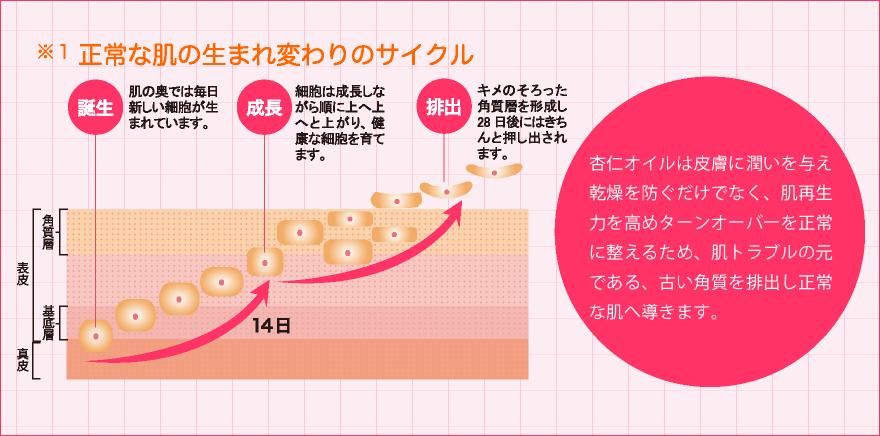 正常な肌の生まれ変わりのサイクル