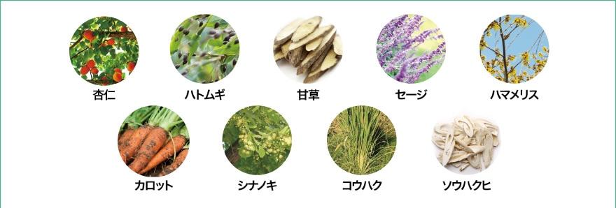 杏仁/ハトムギ/甘草/セージ/ハマメリス/カロット/シナノキ/コウハク/ソウハクヒ