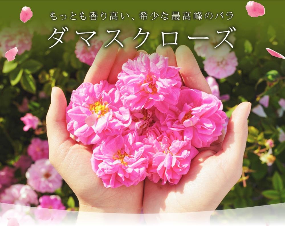 もっとも香り高い、希少な最高峰のバラ ダマスクローズ