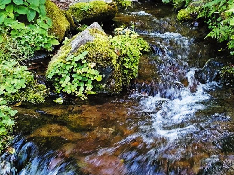 [写真]名水百選「大出口泉水」