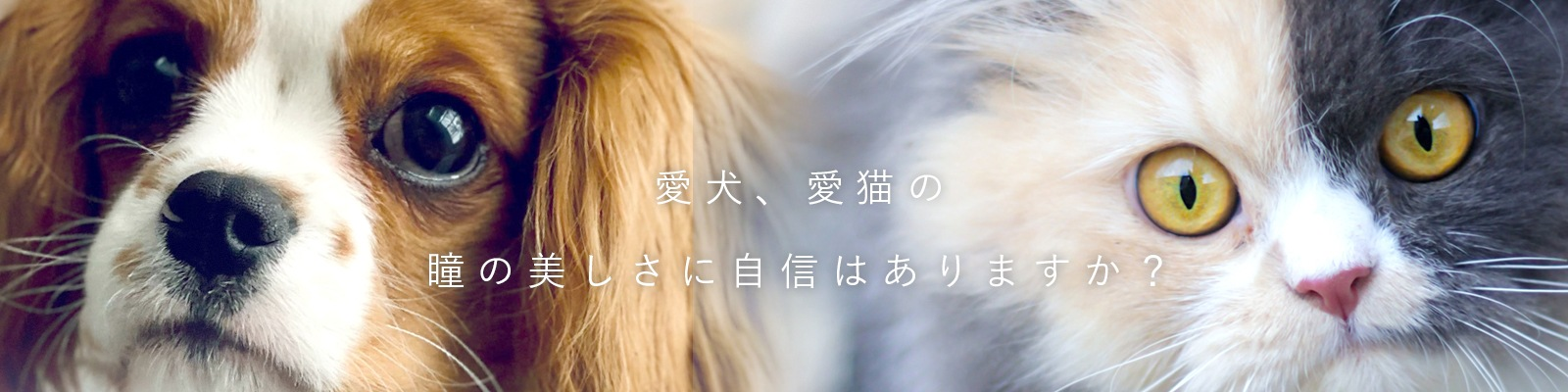 愛犬、愛猫の瞳の美しさに自信はありますか?