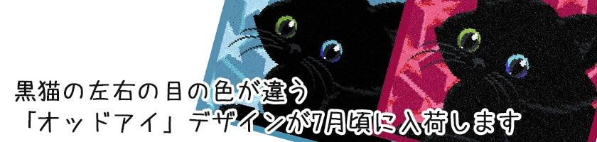 黒猫オッドアイ