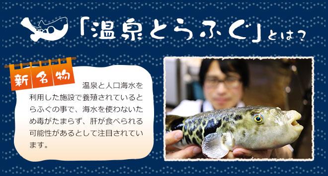 「温泉とらふぐ」とは? 新名物 温泉と人口海水を利用した施設で養殖されているとらふぐの事で、海水を使わないため毒がたまらず、肝が食べられる可能性があるとして注目されています。