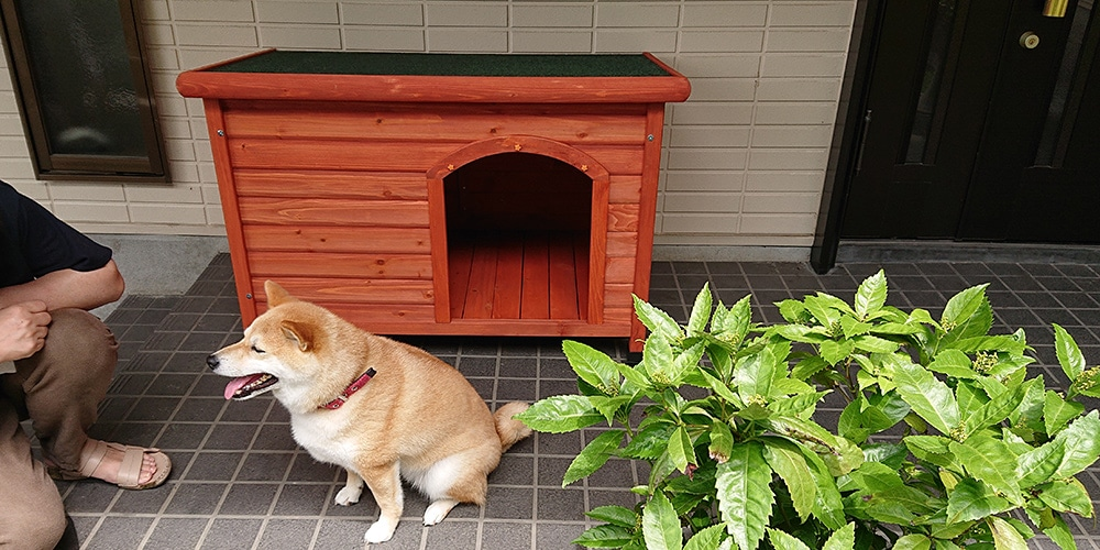 【玄関先】片屋根木製犬舎の設置イメージ2