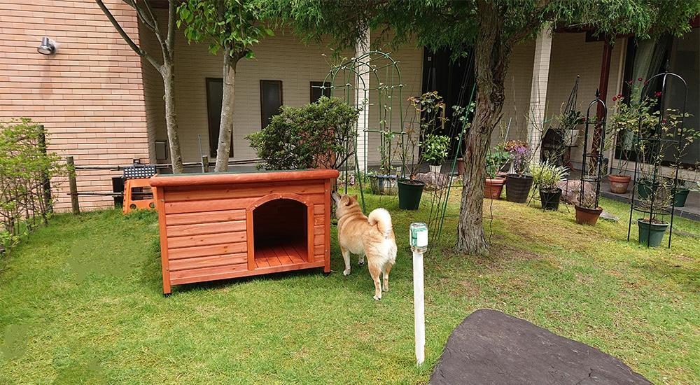 【お庭】片屋根木製犬舎の設置イメージ1