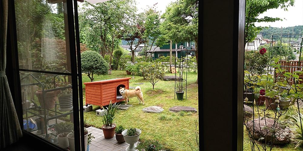 【お庭】片屋根木製犬舎の設置イメージ3