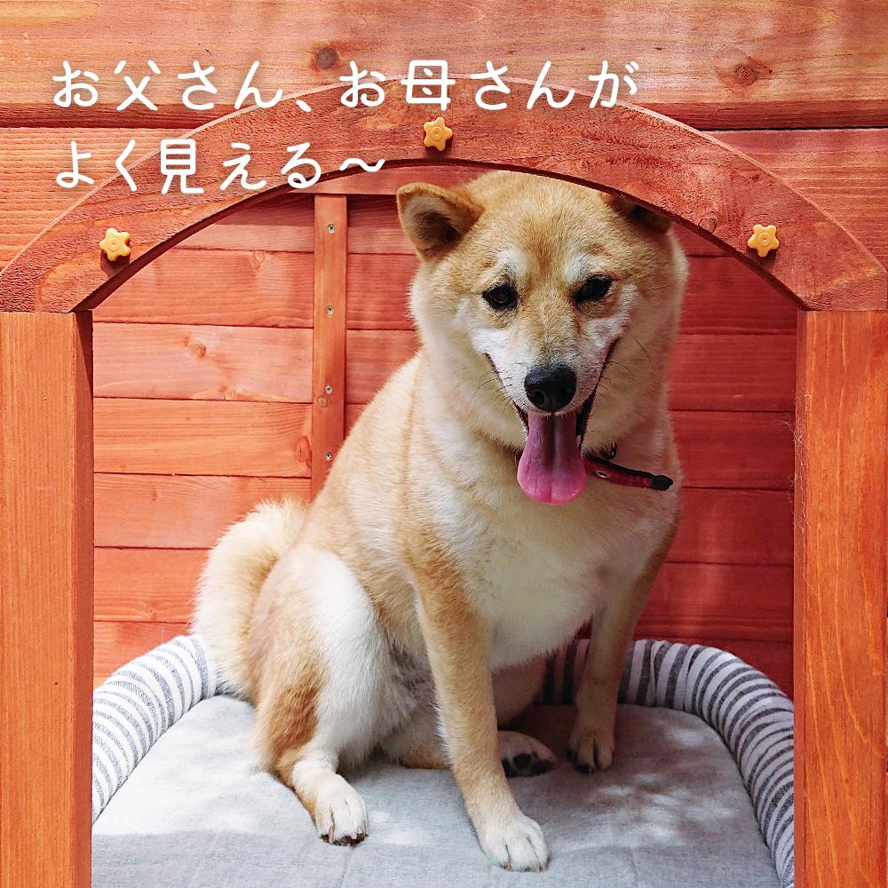 【お庭】片屋根木製犬舎の設置イメージ5