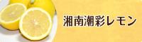 湘南潮彩レモン