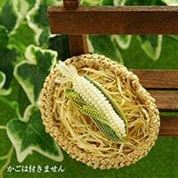 Corn(トウモロコシ)ブローチ 白
