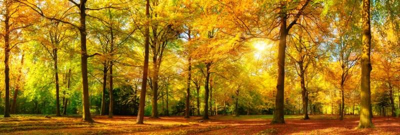 秋の紅葉イメージ