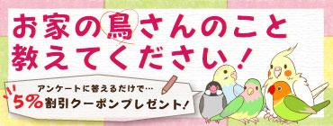 飼い鳥実態調査アンケート