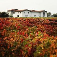 醸造所・ブドウ畑