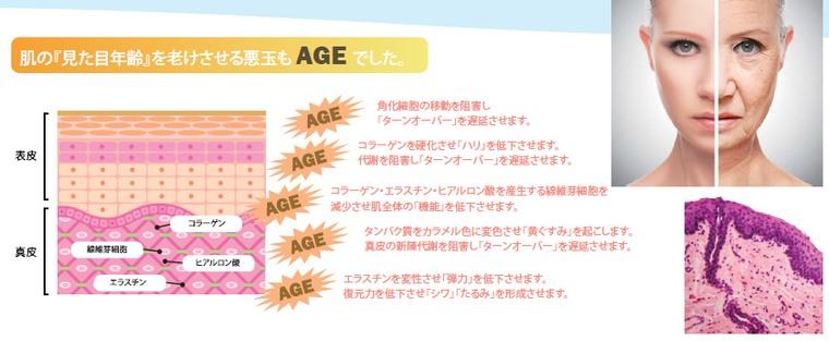 肌の見た目年齢を老けさせるのもAGEでした