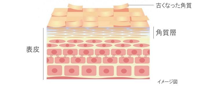 角質とは、タンパク質でできた皮膚の表皮上層部