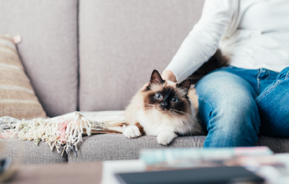 ペットと暮らすおすすめソファ