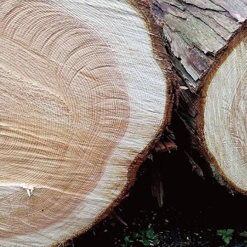 hinokiLAB ディフューザーオイル ひのき木