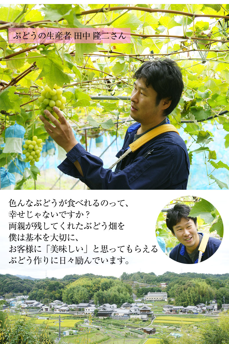 ぶどうの生産者 田中隆二さん