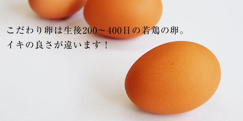 こだわり卵は生後200〜400日の若鶏の卵だけ!
