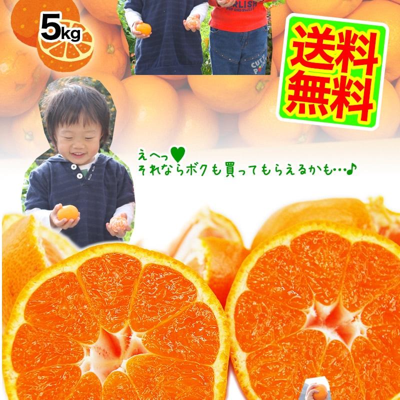 有田みかんが2箱ご購入で送料無料!
