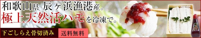 和歌山の新生姜 新鮮 新生姜