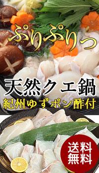 超高級魚!幻の天然クエで豪華クエ鍋を楽しみ下さい!柚子ポン酢付