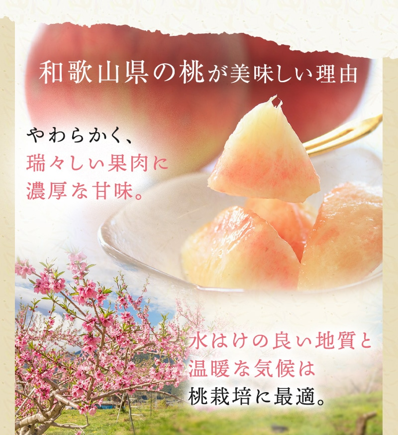 和歌山の桃 和歌山県産