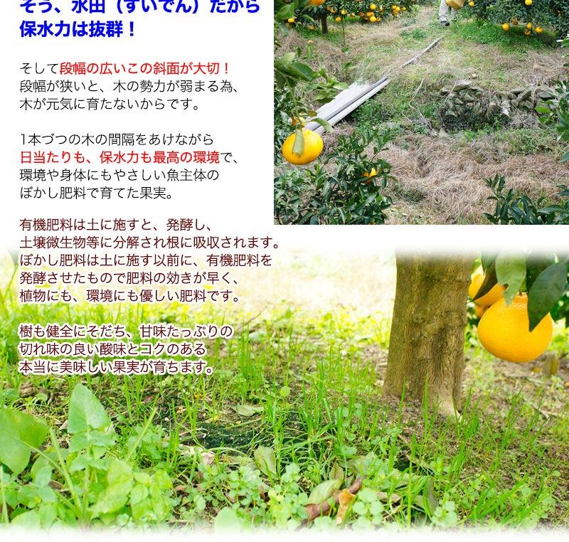 デコポンの発育に一番の場所で、身体にやさしいぼかし肥料で育てています。