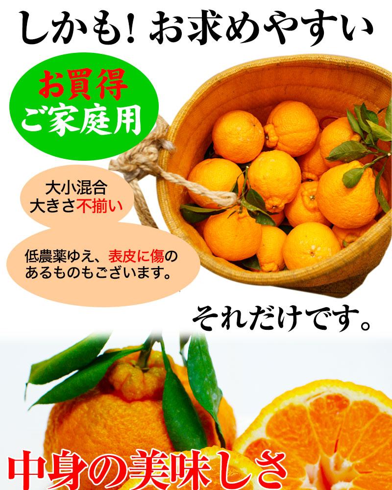 ご家庭用の訳は、大きさ不揃い、表皮に傷のある果実も入ります。