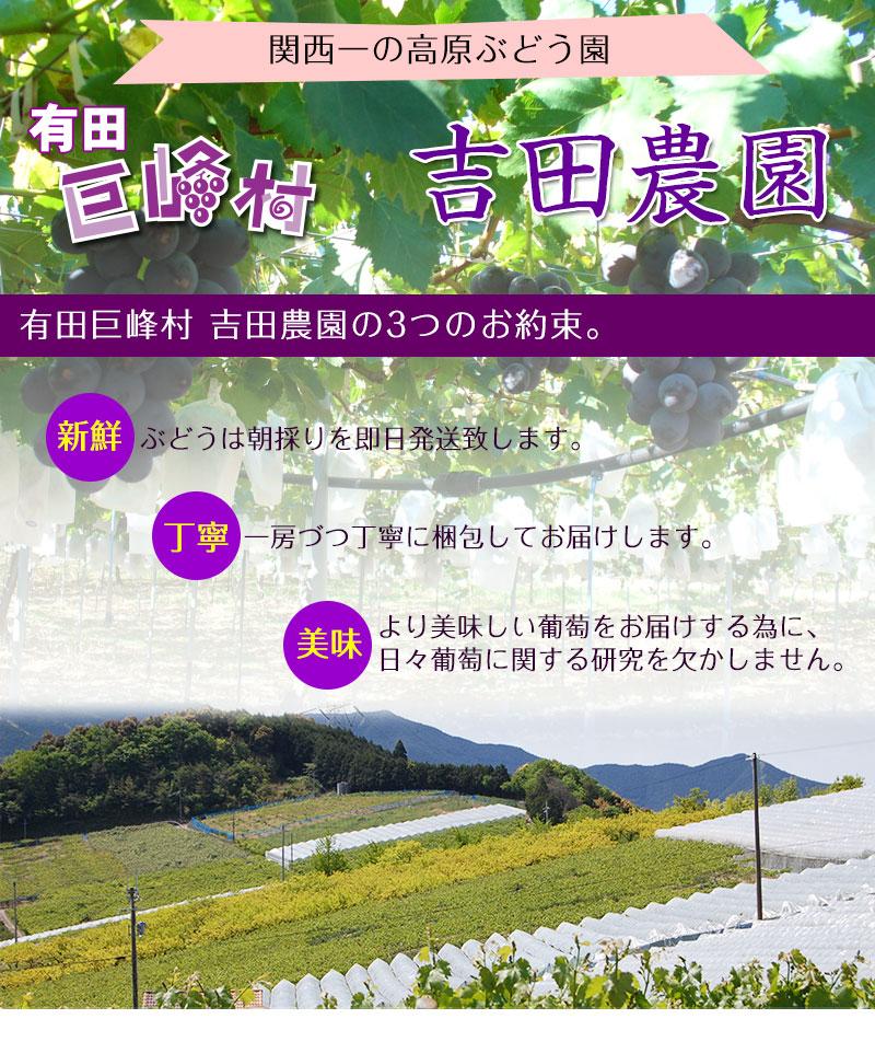 関西一のぶどう園、有田巨峰村よりお届けします!