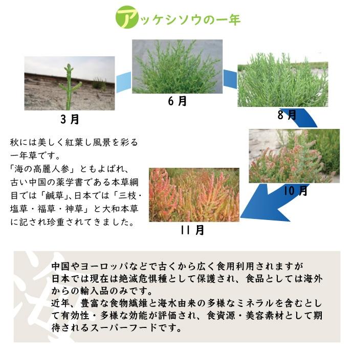 aojiru3説明