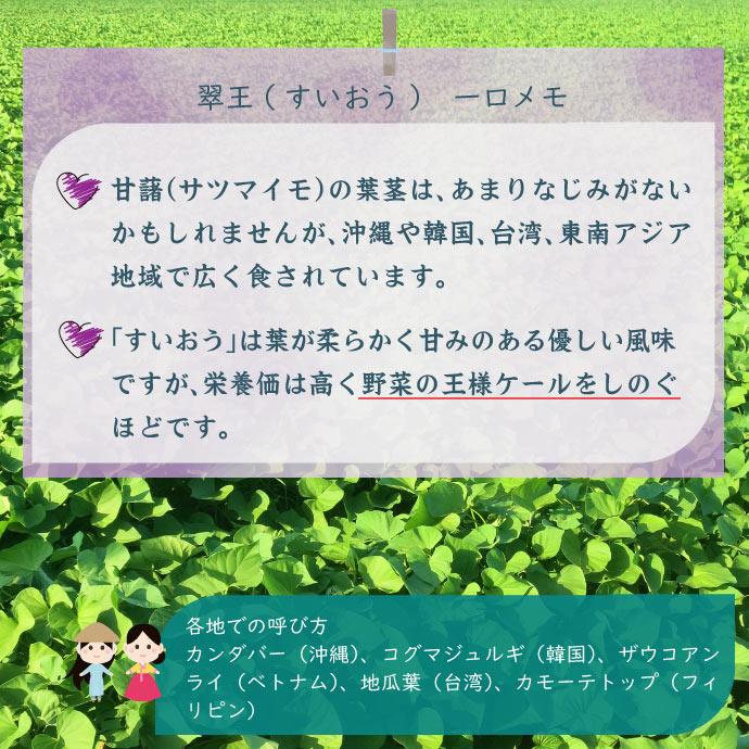 aojiru6説明
