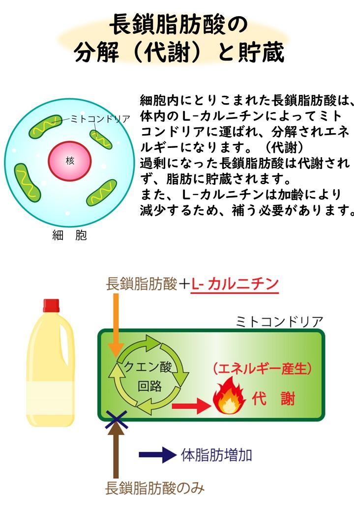 karuni2説明