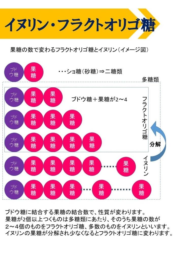 kikuimo5説明