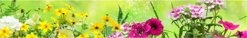 花木用活性剤