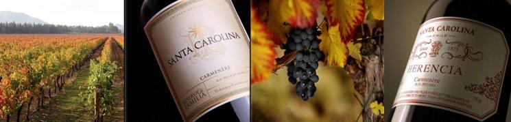 「サンタ・カロリーナ」のチーフワインメーカー