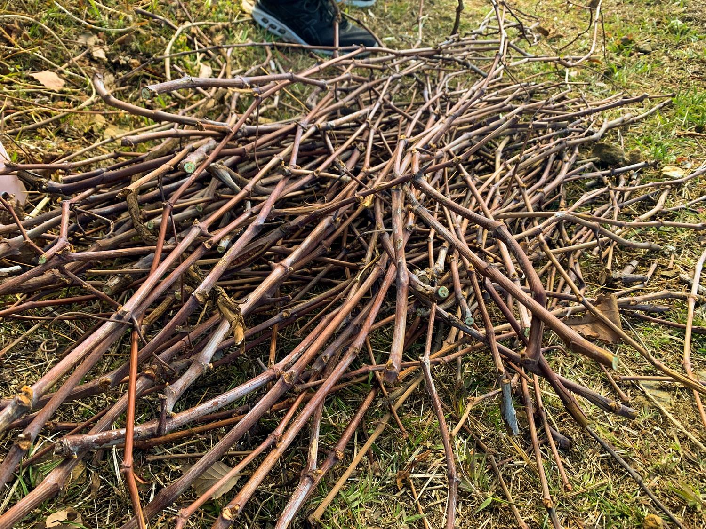 剪定枝は園生たちの手で纏められ、炭や木工細工に加工される。