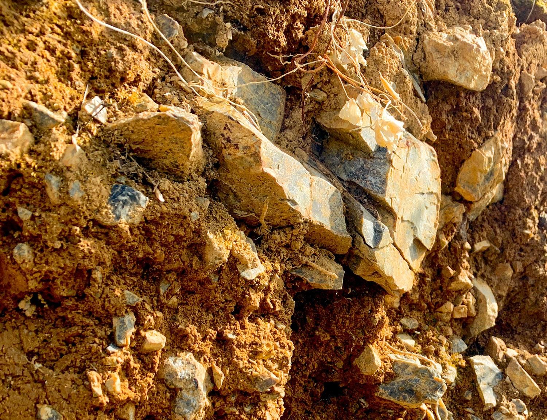 砕屑岩(さいせつがん)類や頁岩に富んだ土壌は、葡萄の根が深くまで侵入しやすい。
