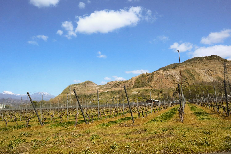 高山村に醸造用葡萄を広めた第一人者佐藤宗一さんが栽培を担う角藤農園。