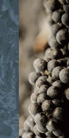 赤ワイン品種