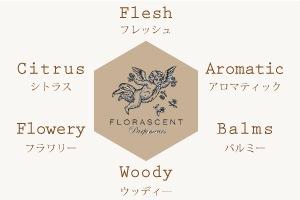 アロマティクス 香りの分類