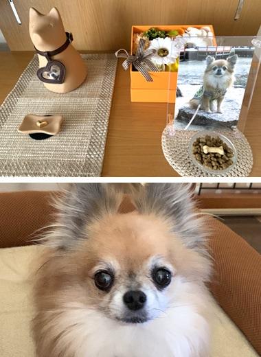 愛犬と位牌の写真