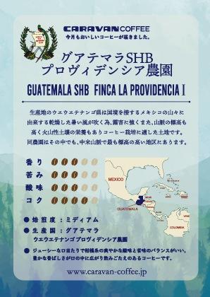 グアテマラ プロヴィデンシア�農園