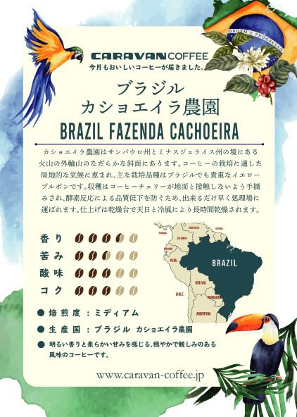 ブラジル カショエイラ農園