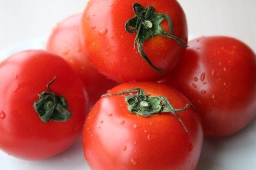 福井県産越のルビートマト
