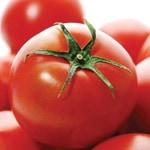 完熟フルーツトマト