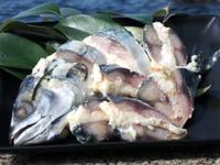 鯖のなれずし切り身