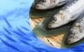 日本近海の魚食材