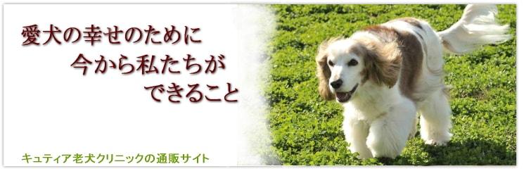 愛犬の幸せのために今から私たちができること